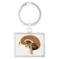 Human brain anatomy, artwork - Landscape Keychain