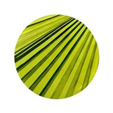 """Green Palm Frond 3.5"""" Button"""