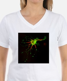 Cell structure, fluorescent micrograph - Shirt