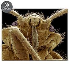 Bedbug head, SEM - Puzzle