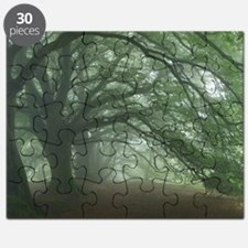 Ancient Beech woodland - Puzzle