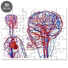 Cardiovascular system, artwork - Puzzle