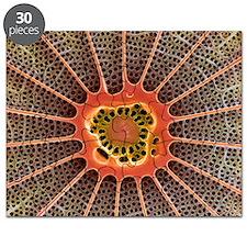Diatom, SEM - Puzzle