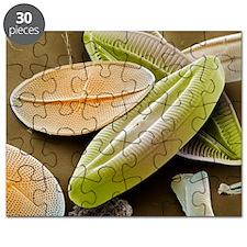 Diatoms, SEM - Puzzle