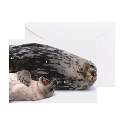 Seal mother and pup - Antarctica Greeting Cards (P