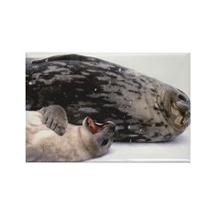 Seal mother and pup - Antarctica Rectangle Magnet