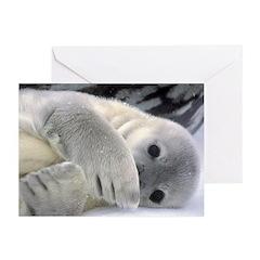 Seal Pup Antarctica Greeting Cards (Pk of 10)