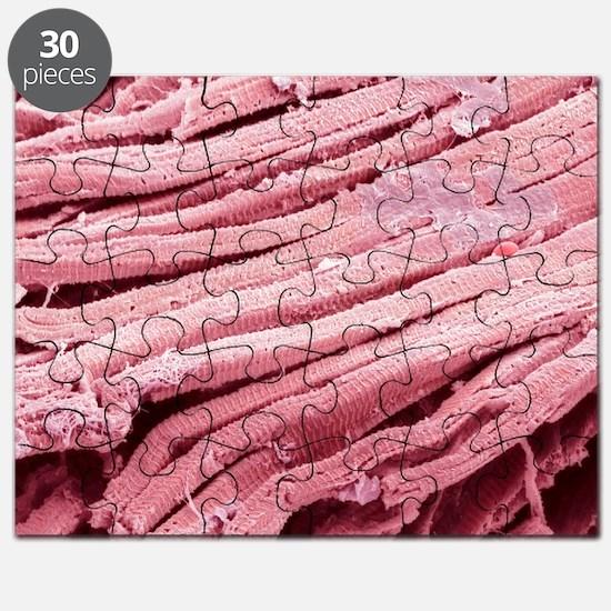 Heart muscle fibres, SEM - Puzzle