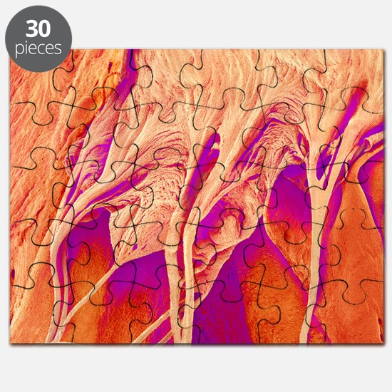 Heart valve and strings, SEM - Puzzle