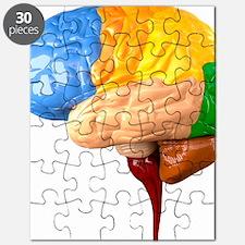 Human brain anatomy, artwork - Puzzle