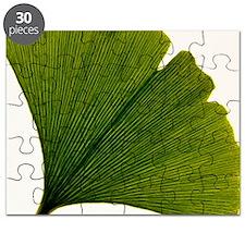 Leaf of Ginkgo biloba - Puzzle