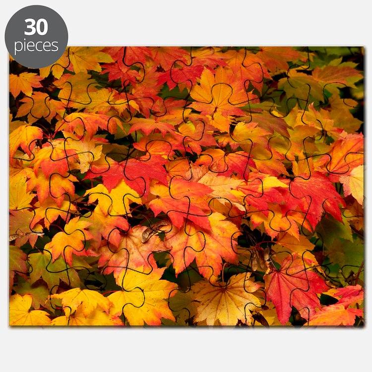 Maple (Acer japonicum vitifolia) leaves - Puzzle