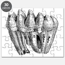 Mastodon teeth, 19th century artwork - Puzzle