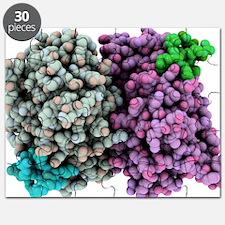 Oestrogen receptor, molecular model - Puzzle