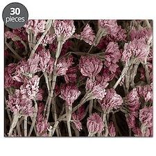 Penicillium fungus, SEM - Puzzle