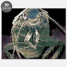 German cockroach, SEM - Puzzle
