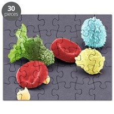 Human blood cells, SEM - Puzzle