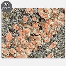 Hippocampal neurons, SEM - Puzzle