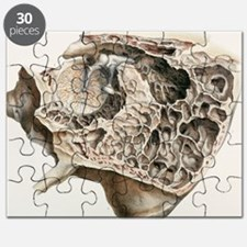 Middle ear anatomy, 1844 artwork - Puzzle
