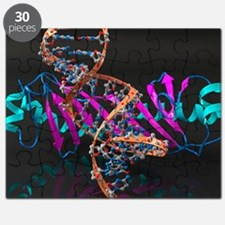 Tata binding protein with DNA - Puzzle