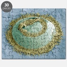 Trichodina parasite, SEM - Puzzle