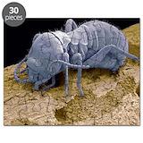 Termite Puzzles