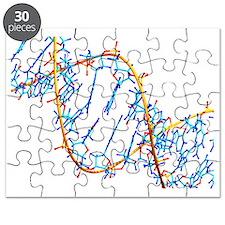 DNA molecule - Puzzle