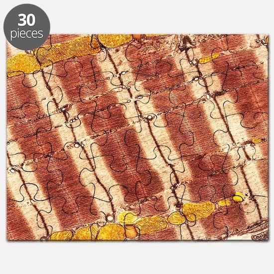 Cardiac muscle, TEM - Puzzle