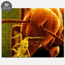 Coloured SEM of a Garden ant carrying a Rose aphid