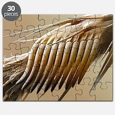 Fruit fly sex comb, SEM - Puzzle