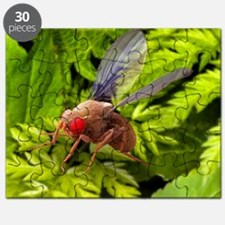 Fruit fly, SEM - Puzzle