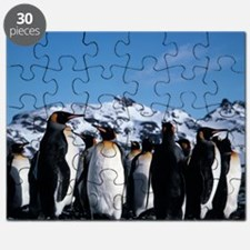 King penguins - Puzzle