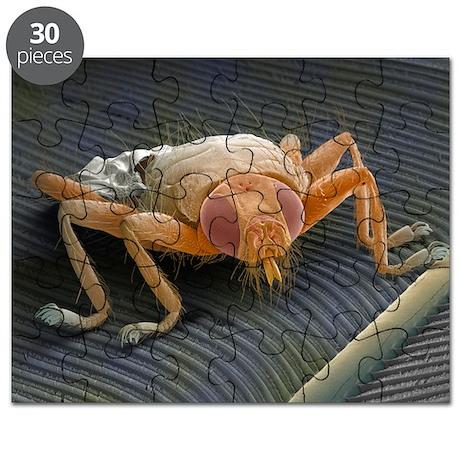Parasitic fly, SEM - Puzzle