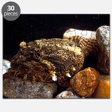 Toadfish - Puzzle
