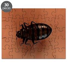 Bedbug, artwork - Puzzle