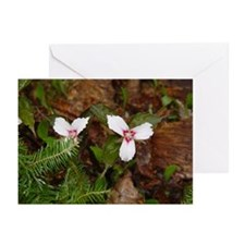 PTXpress White Trillium Greeting Cards (Package of