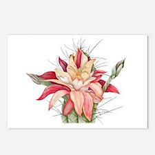 cactus flower Postcards (Package of 8)