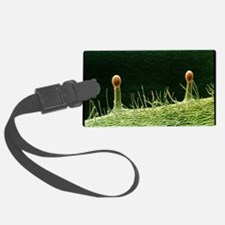Hairs on sepal in rose flower - Luggage Tag