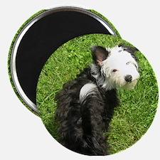 "Unique Dog car 2.25"" Magnet (100 pack)"