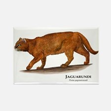 Jaguarundi Rectangle Magnet