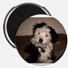 """Funny Dog car 2.25"""" Magnet (100 pack)"""