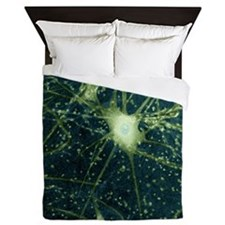 Motor neurons, light micrograph - Queen Duvet