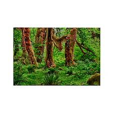 Hoh Rainforest Rectangle Magnet