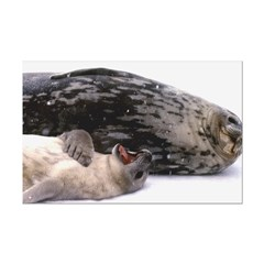 Seal mother and pup - Antarctica Posters