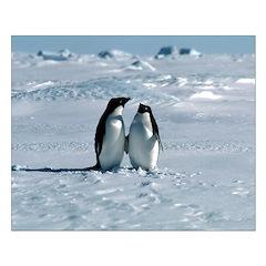 Penguin Pair Posters
