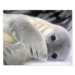 Seal Pup Antarctica Posters