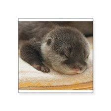 "Sleeping Otter Square Sticker 3"" x 3"""