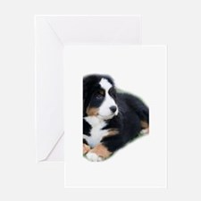 bernese-mountain-puppy_ Greeting Card