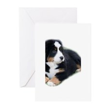 bernese-mountain-puppy_ Greeting Cards (Pk of 10)