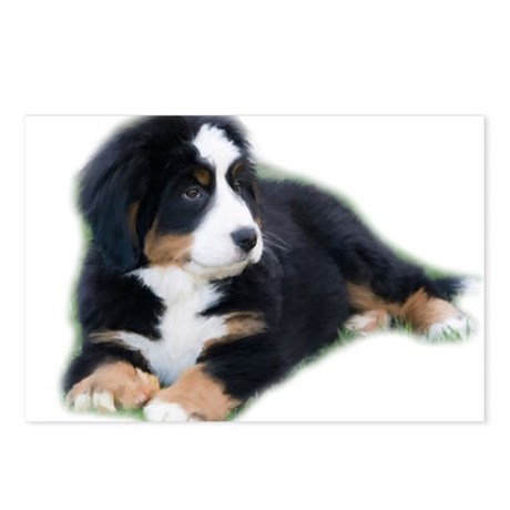 bernese-mountain-puppy_ Postcards (Package of 8)